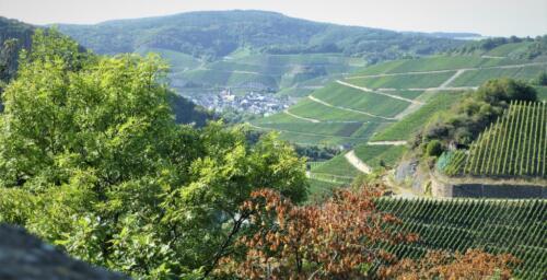 Dernau und Marienthal, von Bunter Kuh aus, Sommer